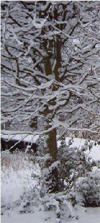 winter_03_200