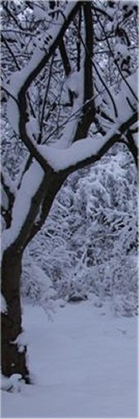 winter_13_200